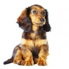 Huisdierenverzekering: kosten, voordelen & nadelen