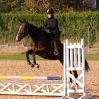Een verzekering voor je paard: voor- en nadelen
